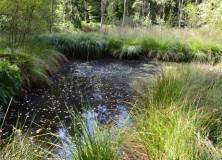 Les Mardelles de Prémery un remarquable patrimoine naturel