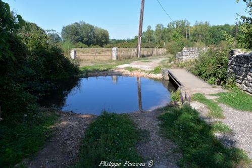Petite mare de Varennes-lès-Narcy un patrimoine