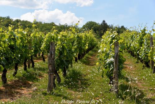 Renaissance des vignobles nivernais un patrimoine de la vigne