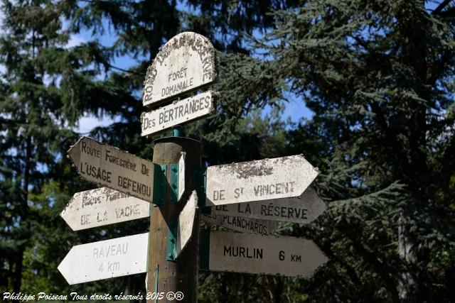 Forêt des Bertranges – Rond point de la Réserve