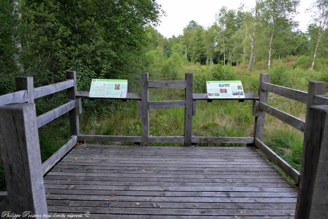 Tourbière du Vernay un beau patrimoine naturel